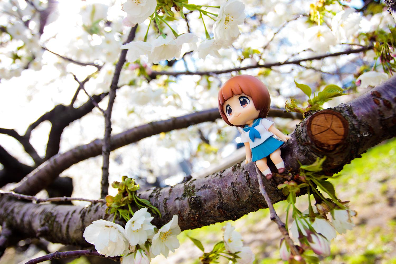 Mako Spring